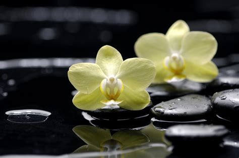 flower zen wallpaper water reflection stones orchid wallpapers and images