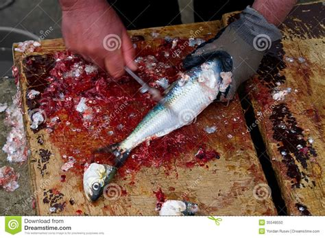 fish cleaning with fisherman cleaning fish stock photo image 35548550