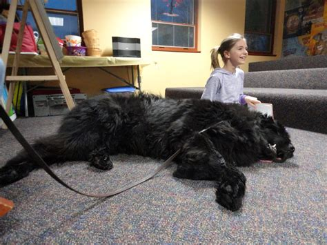 jones dogs big dogs the of paws to read mentor library
