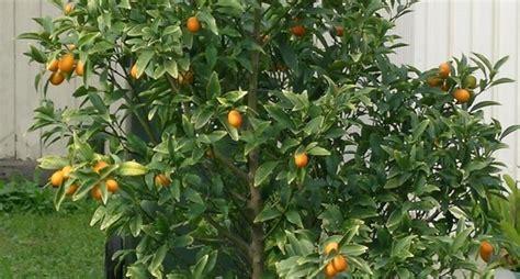 Alberi Da Giardino Piccoli by Realizzare Un Piccolo Giardino Progettazione Giardini