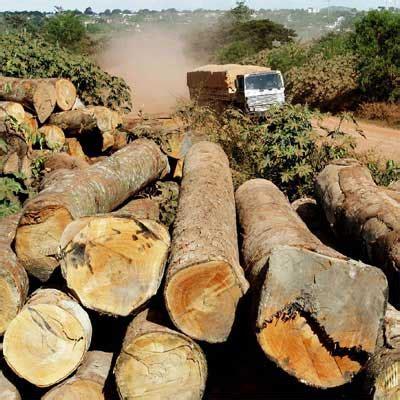 ladas en mexico la contaminaci 243 n ambiental actividad forestal