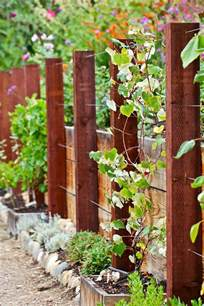 best 25 grape vines ideas on pinterest growing grapes