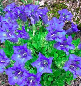 i fiori di bach funzionano fiori di bach contro la depressione funzionano davvero