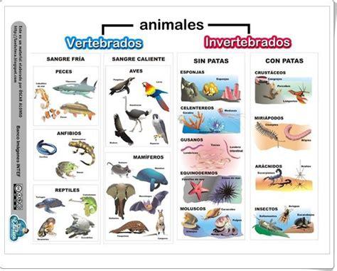 imagenes de animales vertebrados e invertebrados cuadros comparativos de vertebrados e invertebrados
