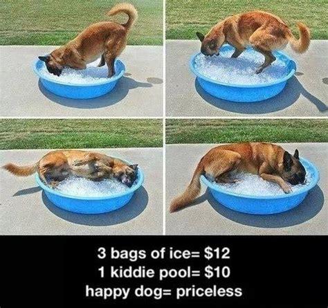 Happy Dog Meme - happy dog priceless