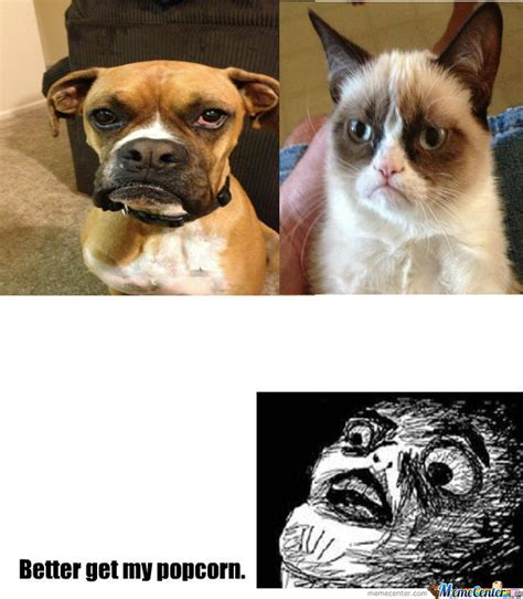Grumpy Dog Meme - grumpy dog vs grumpy cat by pokymon92 meme center