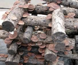 growing shiitake mushrooms is easier than you think how to video bottom of page survival