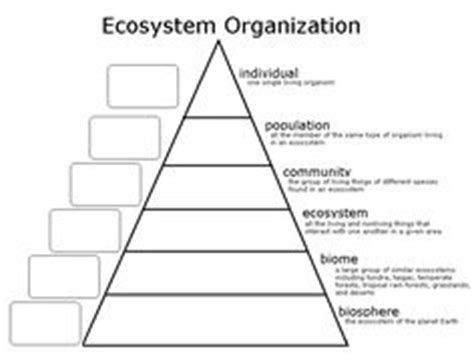 biography pyramid graphic organizer 1000 images about science life on pinterest food webs