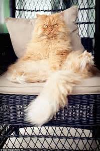 Window Seat For Cat - meet garfi the cat who looks permanently angry daily mail online
