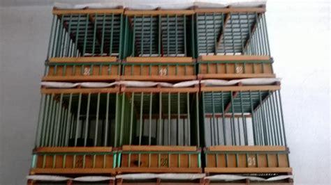 gabbie per tordi dimensioni delle gabbie per tordo bottaccio e tordo