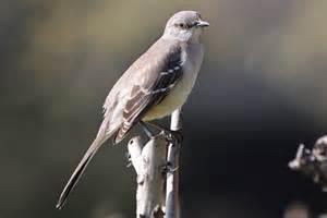medium sized birds