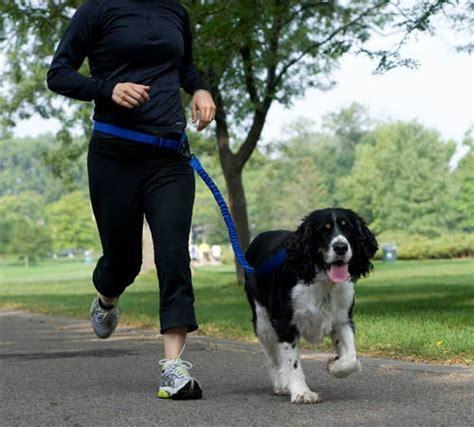 stunt puppy stunt runner leash by stunt puppy milk
