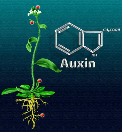 Hormon Auxin swc2012 auxins