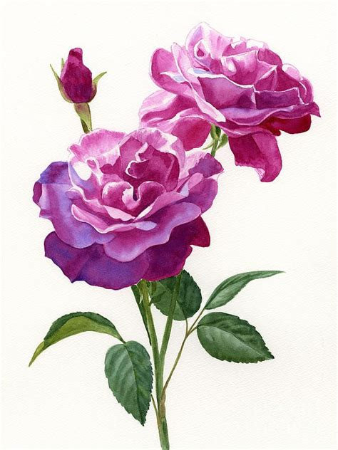 26 rose flower paintings by sharon freeman image