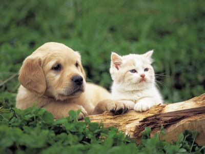 hd animals funny wallpapers cute kittens