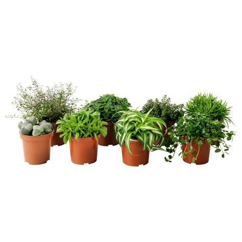 indoor small plants small indoor potted plant