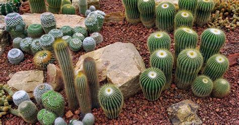 piante grasse in giardino giardino piante grasse come crearlo greenstyle