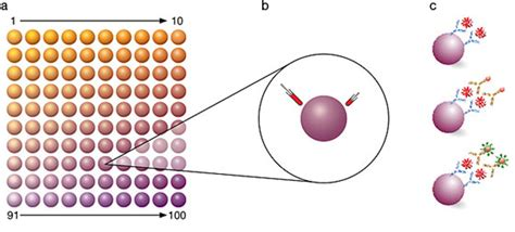 multiplex bead array multiplex detection immunoassays applications