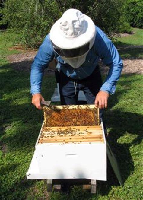 start a beehive in your backyard start an urban beehive backyard beekeeper wayne warren