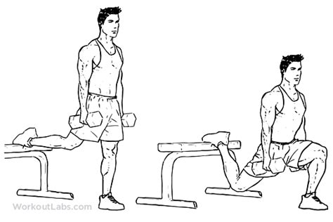 Core Bench Bulgarian Split Squat Illustrated Exercise Guide