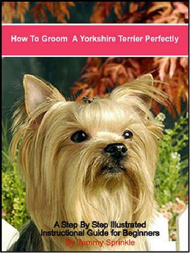 how often can i wash my yorkie how to groom a terrier perfectly a step by step illustrated guide for