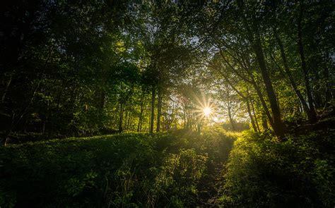 deep forest green deep green forest light photograph by arvid bjorkqvist
