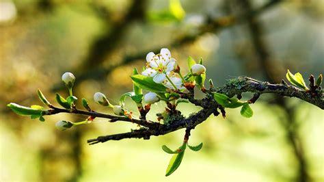 flower bloom bright branch plant hd wallpaper 1920 x 1080 wallpaper 1920x1080 flowers branches tree