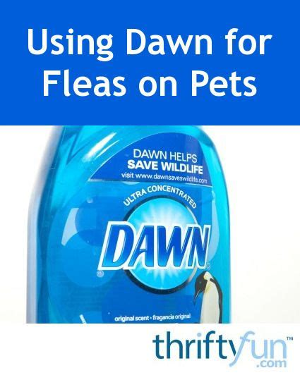 dish soap for fleas on puppies 482 best pets images on