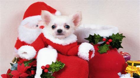 christmas wallpaper with puppies christmas puppies wallpapers wallpaper cave