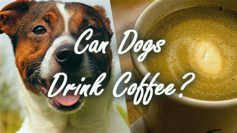 can dogs coffee can dogs drink coffee pet consider