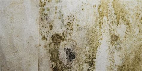 Side Effects Of Mold In House 28 Images Study Suggests Mold Exposure Can Cause