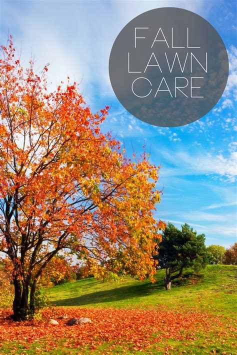 fall lawn care everything you need to know the country chic cottage