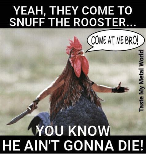 rooster meme yeah they come to snuff the rooster come at me bro you