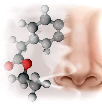 Decoding Odours One Molecule At A Time vintage school 1 5