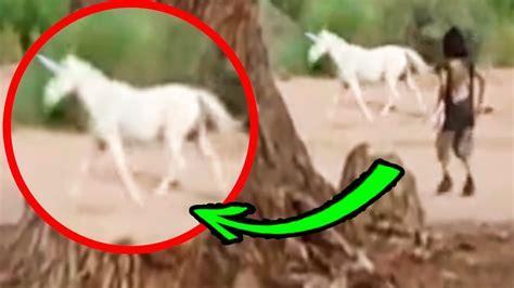 imágenes figurativas reales los 7 unicornios reales captados por una c 225 mara 191 ser 225