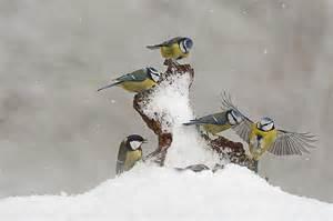 oiseaux des jardins christophe salin photographe