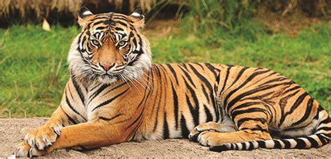 tiger denmark 17 tiger denmark disney princess snow white my