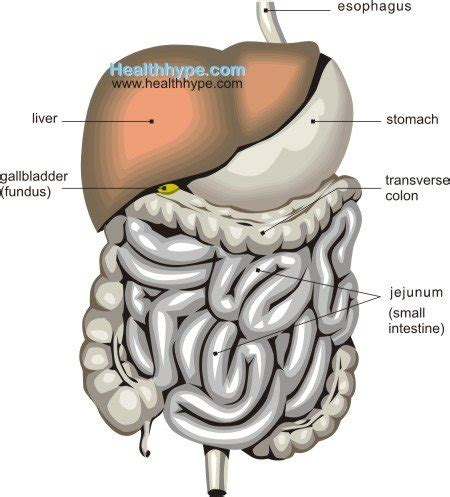 upper section of the small intestine intestinal pain location upper and lower symptoms