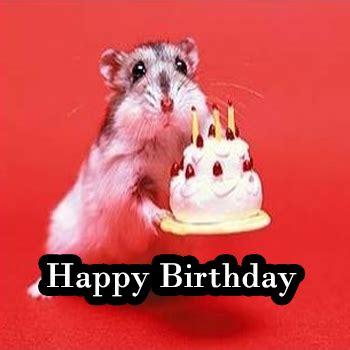 Cute Birthday Meme - happy birthday meme cute special collection