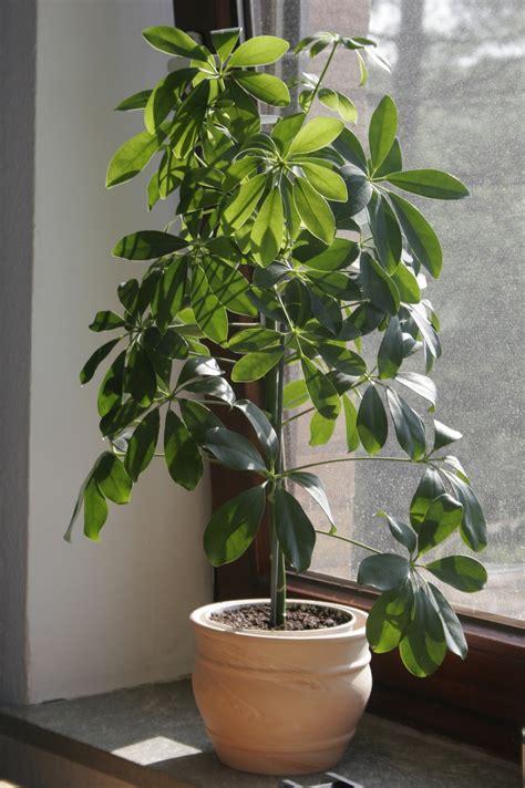 Plante Interieur Sans Lumiere