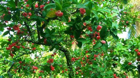 gambar pohon berbagai bentuk