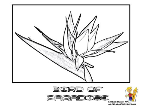 coloring pages bird of paradise 89 tropical flower coloring book tropical flower