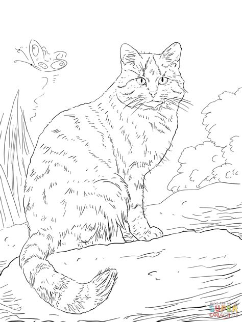 coloring pictures of wild cats european wild cat coloring online super coloring