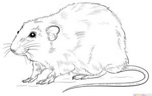 how to draw a rat step by step drawing tutorials