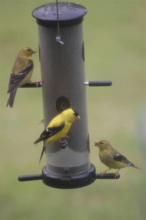 backyard birds matthews nc sunflower seed backyard birds the bird food store