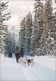 alaska list dogs 17 best images about dogs that can pull cart sleds and wagons on white