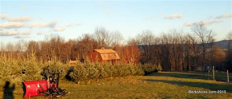 cheshire christmas tree farm opens for first season