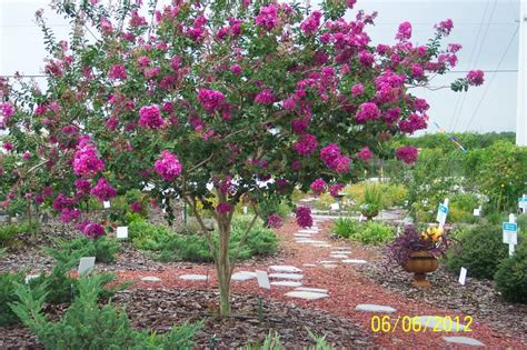 popular flowering shrubs florida landscaping pictures and ideas
