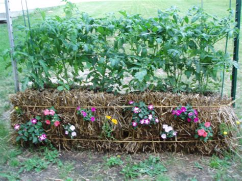 Hay Bale Garden by Straw Bale Gardening How To Create An Amazing Garden