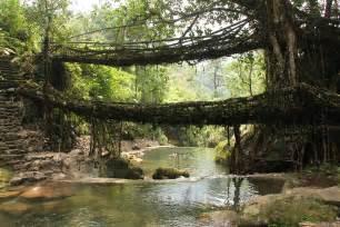 what is root bridge file living root bridges nongriat meghalaya2 jpg